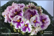 Optimara Nebraska (3фото)