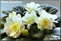 Warm Sunshine (3фото)