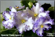 Special Treat (sp.3фото)