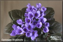 Optimara Annabelle (4фото)