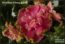 Suncoast Circus Candy (4фото)