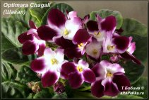 Optimara Chagall (7фото)