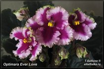 Optimara Ever Love (6фото)