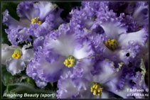 Reigning Beauty (sp.11фото)