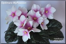 Optimara MyPassion (5фото)