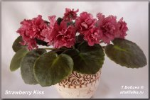 Strawberry Kiss (2фото)
