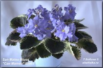 San Mateo Blues (2фото)