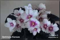 Optimara Kansas (3фото)