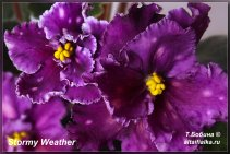 Spanish Dancer (5фото)