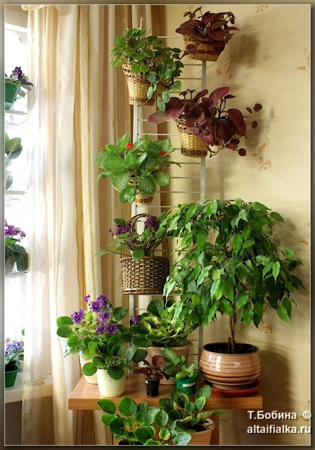 Фото домашних коллекций цветов
